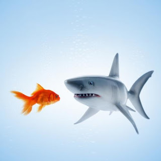sharkfish